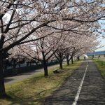 桜・・ちょっと前ですが
